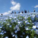 5 Familiar Sights In Spring In Japan