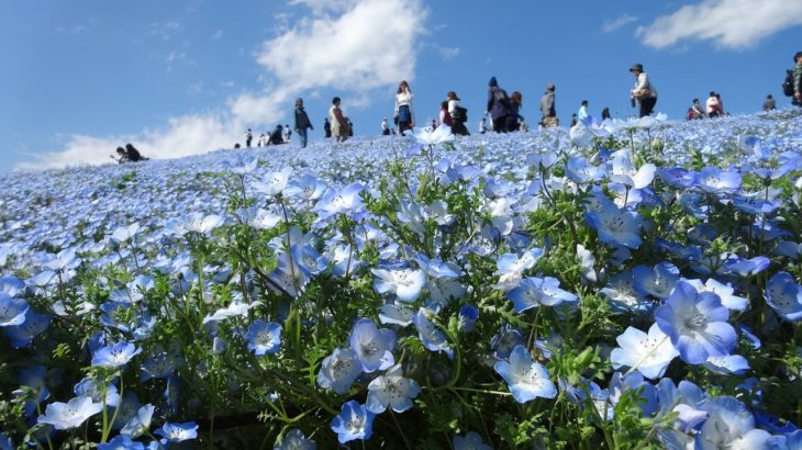 5 Familiar Sights In Spring In Japan
